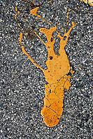 Europe/France/Bretagne/29/Finistère/ Trévignon: Tache de peinture en forme de langouste sur le parking du port de Trévignon