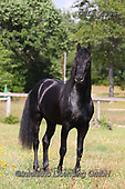 Bob, ANIMALS, REALISTISCHE TIERE, ANIMALES REALISTICOS, horses, photos+++++,GBLA4388,#a#, EVERYDAY