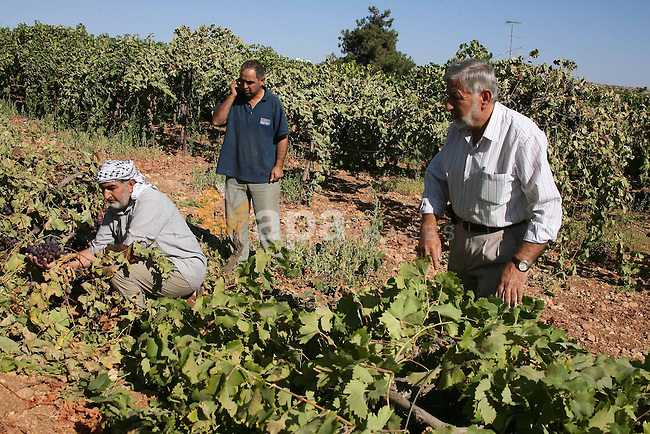Palestinian farmers react after they found their grapervines cut and destroyed, near the Israeli settlements of Kharsina and Kiryat Arbaa, near the flashpoint West Bank city of Hebron, on 20 Septembers 2010. The grapevines belonging to Palestinian were reportedly cut down by Israeli settlers, local media said. Photo by Mamoun Wazwaz