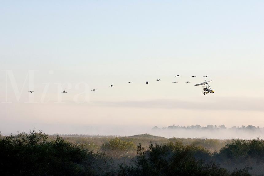 Whooping Cranes following Ultrlight
