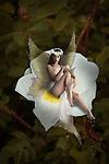 fairy sat on flower