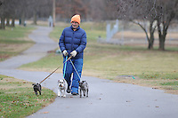 """NWA Media/ J.T. Wampler - Jim Ecker of Bentonville walks three schnauzers Wednesday Dec. 24, 2014 in Bentonville. Walking his two dogs and his son's one is a daily routine for Ecker. """"I probably need the walk worse than they do."""" said Ecker."""
