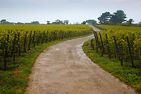 Royaume-Uni, îles Anglo-Normandes, île de Sark (Sercq):  Le vignoble des frères  Barclay  // United Kingdom, Channel Islands, Sark Island (Sercq): vineyard Barclay brothers