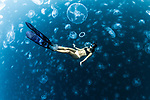 Photographer captures divers swimming amongst hundreds of jellyfish by Alex Kydd