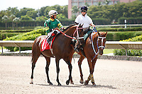Tale of a Champion on post parade for the running of the Bob Umphrey Turf Sprint Stakes, Calder Race Course, Miami Gardens Florida. 07-07-2012.  Arron Haggart/Eclipse Sportswire.