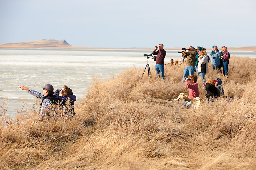 Birders observe white geese from the shores of Freezout Lake near Choteau.