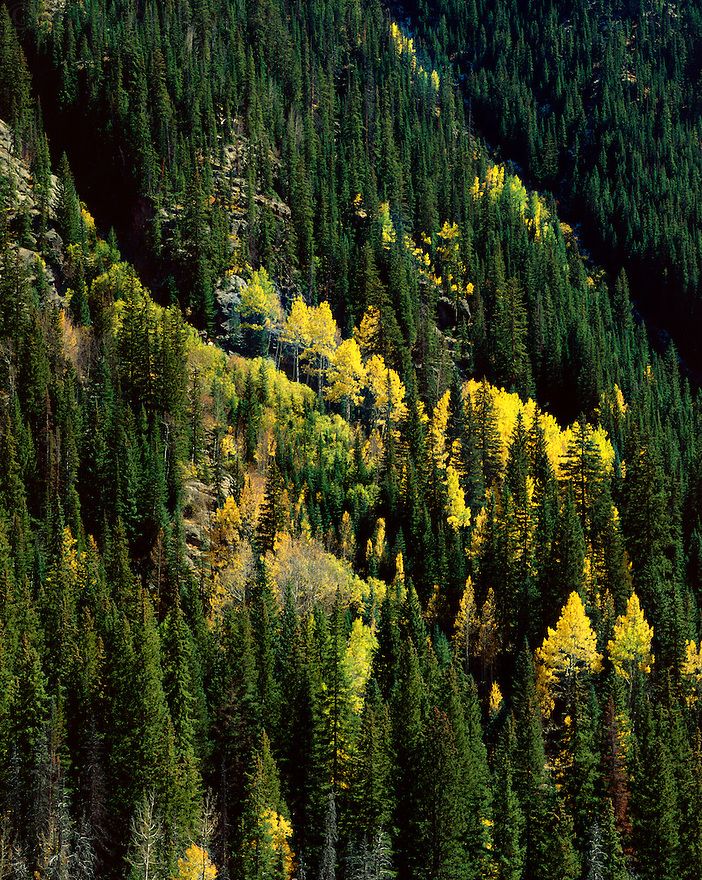"""The Eruption of the Aspens""<br />