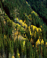 &quot;The Eruption of the Aspens&quot;<br />