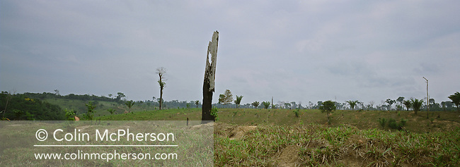 A solitary tree stump standing in an area of former rainforest cleared and burned to make way for agriculture on the banks of the Tapajos river, adjacent to a protected reserve. The Floresta Nacional do Tapajos (FLONA), a 6500 km2 protected reserve, was home to several small communities which lived on the banks of the Rio Tapajos river. The rainforest was cleared to make way for cattle ranching and growing soy beans for export.