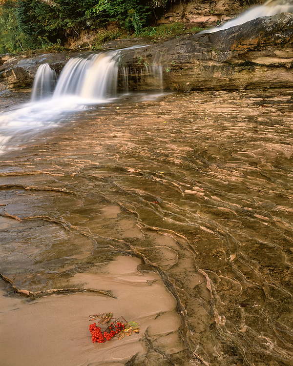 Mountain Ash fruits in a sand bar in eroded sandstone formations below a waterfall; Pictured Rocks National Lakeshore, MI