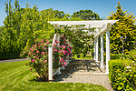 Madison, CT. Fancy arbor with climbing roses.