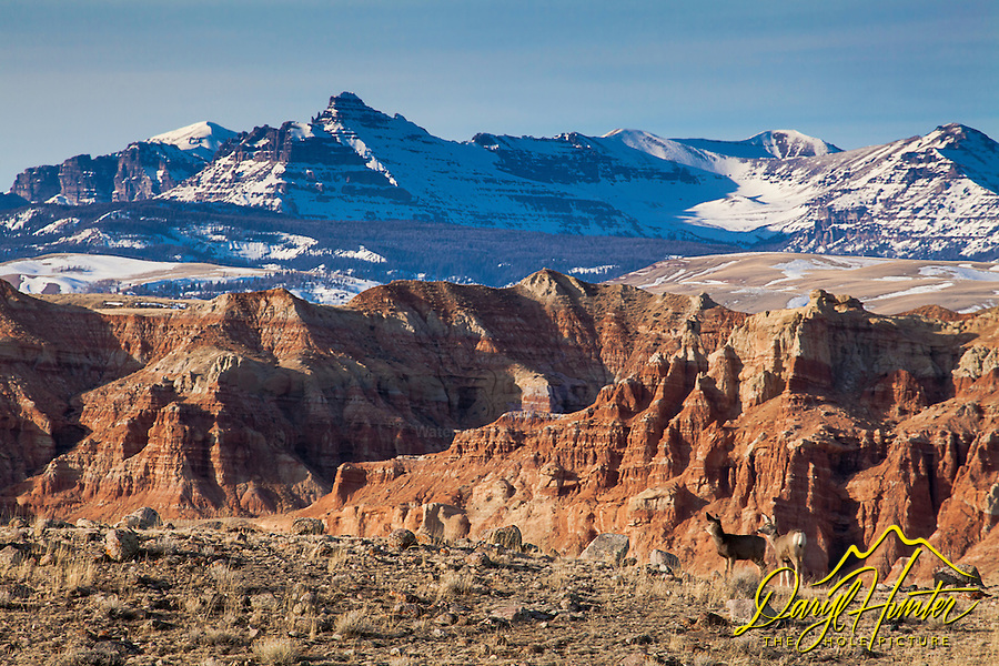 Two Deer, Badlands of Dubois, Abasaroka Mountains. Wyoming