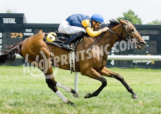 Settling for Gold winning at Delaware Park on 7/12/11
