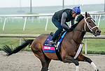 January 23, 2020: Arklow gallops as horses prepare for the Pegasus World Cup Invitational at Gulfstream Park Race Track in Hallandale Beach, Florida. Scott Serio/Eclipse Sportswire/CSM