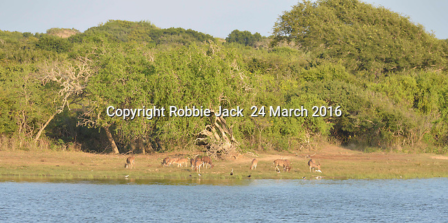 Yala National Park Sri Lanka<br /> Spotted Deer and birds