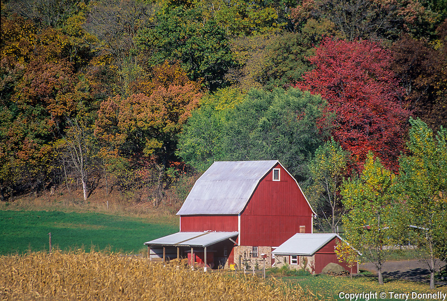 Sauk County, WI<br /> Red barn with dried cornfields under fall colored Baraboo Hills