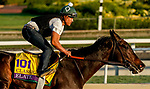October 27, 2019 : Breeders' Cup Classic entrant Elate, trained by William I. Mott, exercises in preparation for the Breeders' Cup World Championships at Santa Anita Park in Arcadia, California on October 27, 2019. John Voorhees/Eclipse Sportswire/Breeders' Cup/CSM