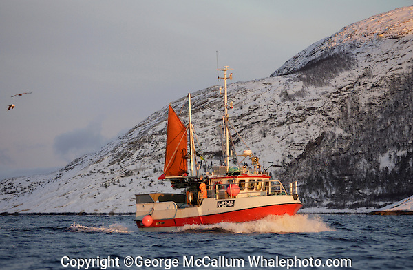 Traditional Norwegian fishing boat or Sjark under way in coastal fjord. Lofoten, North Norway