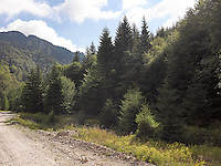 FOREST_LOCATION_90004