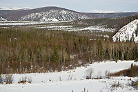 Aerial view of Mitch Seavey as he runs down the trail in between Takotna and Ophir on Thursday during the 2008 Iditarod