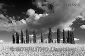 Tom Mackie, LANDSCAPES, LANDSCHAFTEN, PAISAJES, photos,+B&W, EU, Europa, Europe, European, Italia, Italian, Italy, Toscana, Tuscan, Tuscany, Val d' Orcia, black & white, black and w+hite, cloud, clouds, cloudscape, colour, cypress, misc, places, plant descriptions, plant types, travel, tree, trees, weather+weather & time of day,B&W, EU, Europa, Europe, European, Italia, Italian, Italy, Toscana, Tuscan, Tuscany, Val d' Orcia, bla+ck & white, black and white, cloud, clouds, cloudscape, colour, cypress, misc, places, plant descriptions, plant types, trav+,GBTM110155-1,#L#
