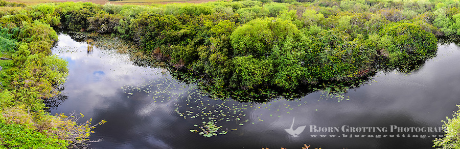 US, Florida, Everglades. View from Shark Valley Observatory Tower. Stitched panorama.