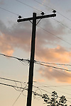 Telephone pole and wires at dusk.