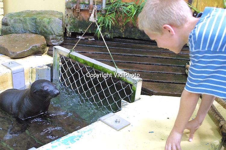 Foto: VidiPhoto..RHENEN - De jongste artiest van Nederland steelt de show in Ouwehands Dierenpark. Hoewel het pasgeboren zeeleeuwtje nog bijna niets kan, stijgt een luid gejuich op in het zeeleeuwentheater zodra het diertje zich maar even laat zien. Bijna zes weken geleden werd het jong van moeder Loesje op het podium geboren. Inmiddels kan het zeeleeuwenjong goed zwemmen en toont de moeder het dier tijdens de show aan het publiek.