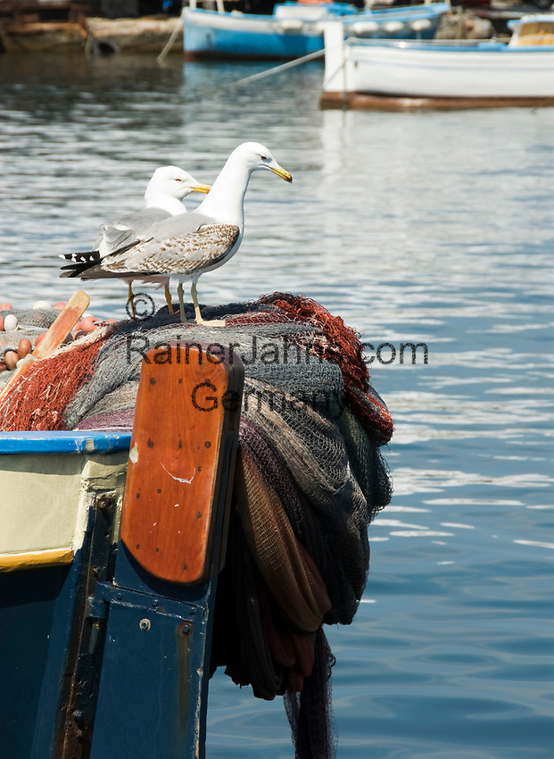 ITA, Italien, Kampanien, Ischia, vulkanische Insel im Golf von Neapel, Ischia Porto: zwei Moewen auf einem Fischerboot | ITA, Italy, Campania, Ischia, volcanic island at the Gulf of Naples, Ischia Porto: two gulls on fisherboat