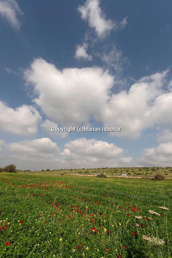 Israel, Shephelah region. Flowers by route 353