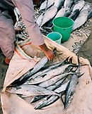 OMAN, Muscat,  man picking up fish for sale at market