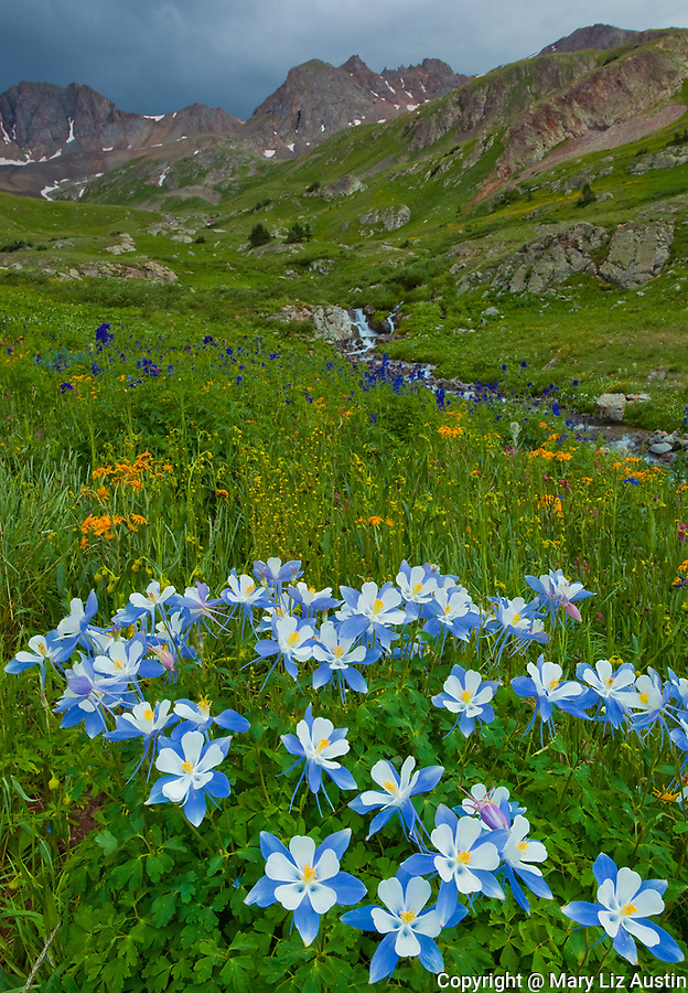 San Juan Mountains, CO<br /> American Basin with Colorado columbine (Aquilegia coerulea) and wildflower meadows beneath Handies Peak with storm clouds