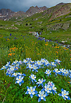San Juan Mountains, CO<br /> American Basin with Colorado columbine (Aquilegia coerulea) and wildflower meadows beneath Handies Peak with storm clouds