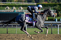 Ready to Act, trained by Chad Brown, trains for the Breeders' Cup Juvenile Fillies Turf at Santa Anita Park in Arcadia, California on October 30, 2013.
