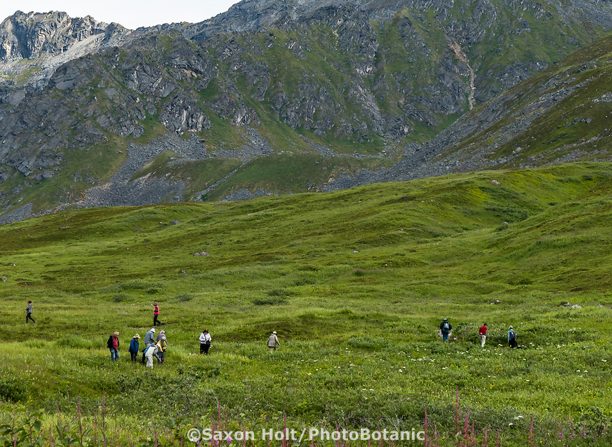 Heath tundra near Hatcher Pass, Alaska,  Independence Mine State Historical Park; Pacific Horticulture Society tour