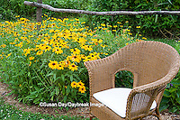 63821-206.09  Wicker chair and rustic fence in garden with Black-eyed Susans (Rudbeckia hirta) Marion Co. IL