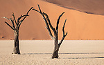 A Closer View Of The Same Trees, Deadvlei, Sossuvlei.