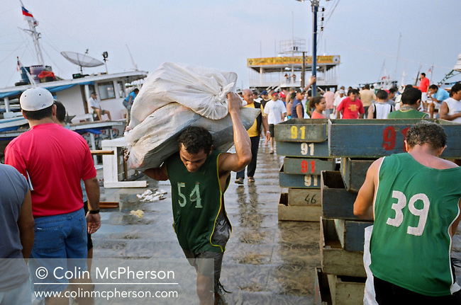 A porter carrying bags of fish from the quayside at Manaus fish market to waiting merchant's vehicles for distribution and sale across the city with a population of 2.2m. 2005 saw the worst drought in the region for 60 years which affected fish sizes and catches. Declining catches were also blamed on the loss of habitats in the rivers Amazon and Rio negro due to deforestation of the Amazonian rainforest basin.