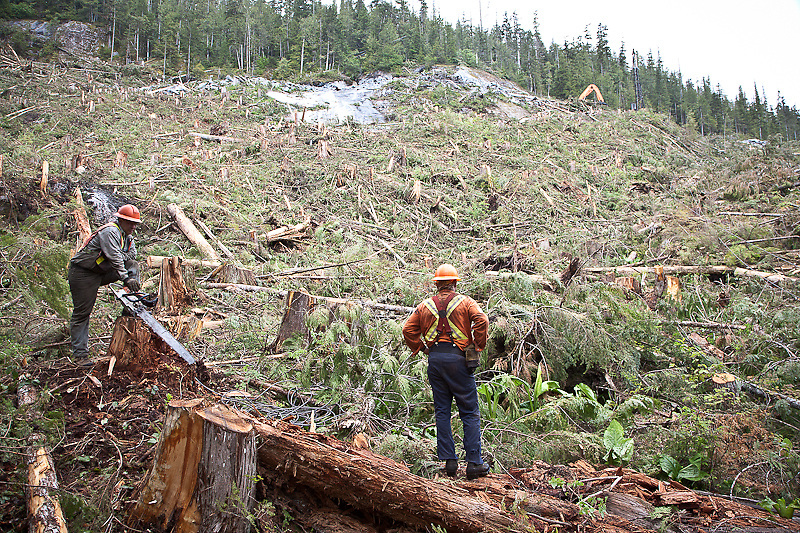 "Foreman Greg Schneider and hooktender Terry Freiheit at the back end of a setting. Note the coil of ""straw line"" between them. Freiheit will soon be changing ""roads,"" using the lighter weight straw line to move the rigging from one set of blocks (in this case, attached to stumps at the back end). The saw Schneider is holding is used to notch these ""tail hold"" stumps so that the straps holding the blocks don't slip when the grapple yard puts tension on the lines. Stafford Lake, June 2008."