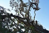 2017 FPL Hurricane Irma damage in Broward County, Fla. on September 15, 2017.