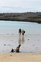 Galapagos Seelöwe (Zalophus wollebaeki)