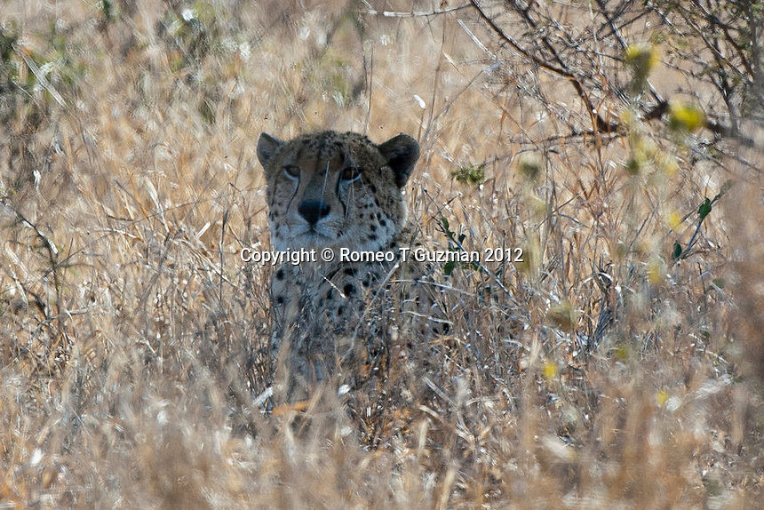July 26, 2012: Drive to Lataba Camp in Kruger National Park in South Africa