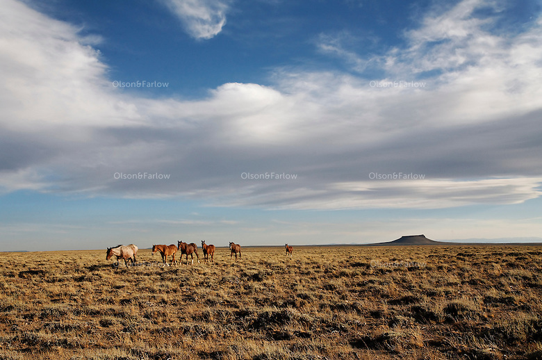 A band of wild horses roam the wide open spaces in western Wyoming along Pilot Butte Wild Horse Scenic Loop Tour on top of the White Mountain.  There are around 1000 horses live on the checkerboard ownership land and the community of Green River teamed up with the BLM to create a route for people to drive to see the scenery and horses. It is located north between the communities of Rock Springs and Green River.