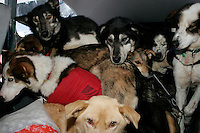 Monday March 12, 2007   ----   Dropped dogs sit in the back of Iditarod Air Force pilot Greg Nieson's Cessna plane at Kaltag for a ride back to Unalakleet.