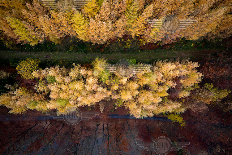 A track running through a forest with trees changing colour in Autumn in Kashubia.
