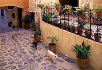 Two cats, black and white, roam a narrow backstreet in Hania. Crete, Greece.