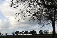 Trees silhouetted against an autumn sky, north of Lee Common, Buckinghamshire, England.