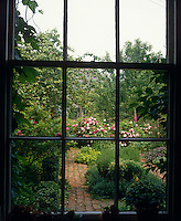 View through a sash window to a traditional English garden planted with Roses, Lavender, Delphiniums and box