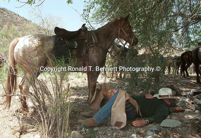 Cowboy and horse rest under tree after hard day on roundup, Arizona, sleeping cowboy, cowboy rest with his horse, cowboy rest under tree with horse, cowboy rest, cowboy, cowboy ad horse, resting cowboy, sleeping cowboy, roundup, tired cowboy, rest after roundup, resting cowboy, Wheels, gold mining wheel, Gold mining ghost town, ghost town, Gold mining, gold, goldmine, remove gold, wheels from gold mine, Mining equipment, gold panning, open pit, gold extraction, gold rush, gold prospecting, ore, ore genesis, placer mining,Arizona, State of Arizona, Southwest, desert, 48th State, Last of contiguous states, Phoenix, Scottsdale, Grand Canyon, Indian reservations, four corners, desert landscape, exrophyte, western United States, Southwest, Mountains, plateaus, ponderosa pines, Colorado River,  Mountain lion, Navajo Nation, No daylight savings time, Arizona Territory, Arizona, AR, Ariz, Airzona, Arizonia, Arizone, AZ, Fine Art Photography by Ron Bennett, Fine Art, Fine Art photography, Art Photography, Copyright RonBennettPhotography.com ©
