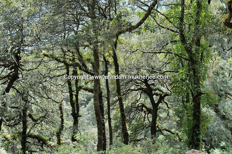 A lush green forrest in West Bhutan. Arindam Mukherjee..